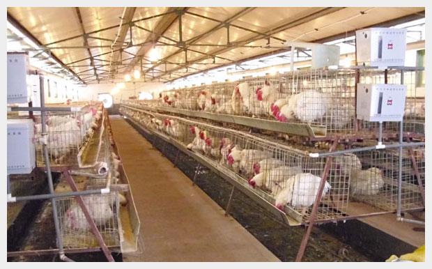 天源种禽繁育有限公司