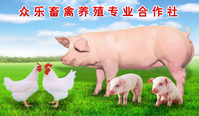 众乐畜禽养殖合作社