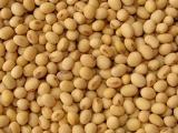 我公司常年收购饲用大豆
