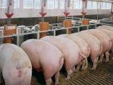 配置猪饲料注意事项