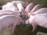 养殖户不要长期对畜禽饲用高锌日粮