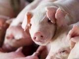 划定9.22万个禁养区,养殖户压力越来越大