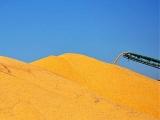 深加工产能迅猛增长 玉米行业面临双重风险