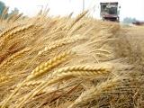 """国际粮价上涨,夏粮减产玉米缺口增大,国人""""饭碗""""有保障吗?"""
