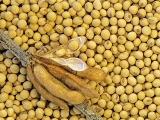 专家建议:修订饲料标准,设立蛋白质含量上限