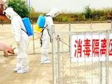 农业农村部:与发生非洲猪瘟疫情省相邻省份暂停生猪跨省调运