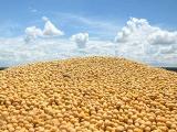 为什么大豆成为贸易战的代理战场
