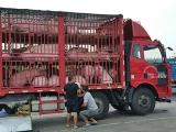 农业农村部发话了:下月起生猪不能想运就运了!