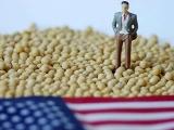 中美贸易战,美国大豆堆积如山,中国为什么确实需要大豆?