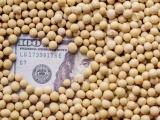 中美大豆贸易将回归常态?